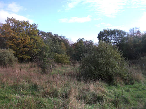 Whalley Forest Garden site, October 2018